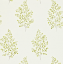 Product: 211998-Angel Ferns