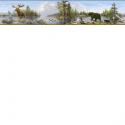 Product: HTM48541B-Moose Lake Border
