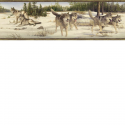 Product: HTM48471B-Wintry Wolves Border