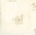 Product: HTM49484-Horse Sketch