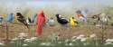 Product: PUR44671B-Songbird Menagerie