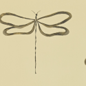 Product: 110242-Dragonfly