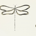 Product: 110247-Dragonfly