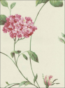 Product: CCP12141-Glenmont Floral