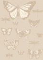 Product: 10315064-Butterflies