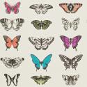 Product: 111079-Papilio