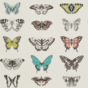 Product: 111077-Papilio
