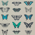 Product: 111078-Papilio