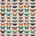 Product: 120344-Papilio