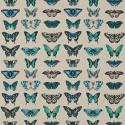 Product: 120343-Papilio