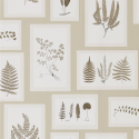 Product: 215714-Fern Gallery