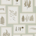 Product: 215715-Fern Gallery