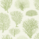 Product: 1072008-Seafern