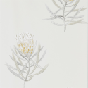 Product: 216328-Protea Flower