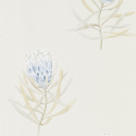 Product: 216327-Protea Flower