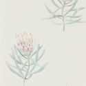 Product: 216330-Protea Flower