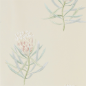 Product: 216329-Protea Flower