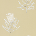 Product: 216331-Protea Flower