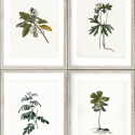 Product: WP20153-Botany