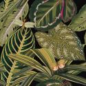 Product: WP20159-Amazonia