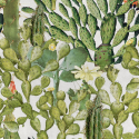 Product: WP20166-Opuntia