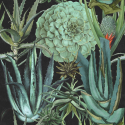 Product: WP20167-Succulentus