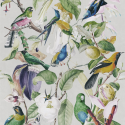 Product: WP20172-Tropical Birds