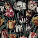 Product: WP20177-Tulipa