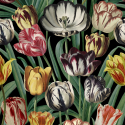Product: WP20178-Tulipa