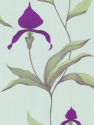 Product: 664027-Orchid