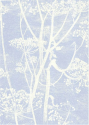 Product: 667050-Cow Parsley