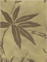 Product: BW450064-Bamboo Flock