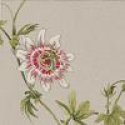 Product: DPEMPF103-Passion Flower
