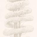 Product: P55701-Linnaeus