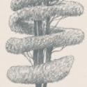 Product: P55702-Linnaeus