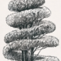 Product: P55706-Linnaeus
