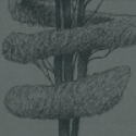 Product: P55707-Linnaeus