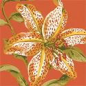 Product: T2510-Kauai