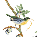Product: T3118-Little Bird