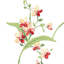 Product: T3135-Orchid Trail