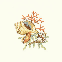 Product: T5148-Seashell