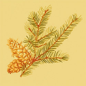 Product: T6337-Evergreen