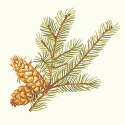 Product: T6338-Evergreen