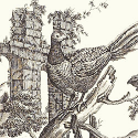 Product: T6341-Pheasant Toile