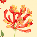 Product: T6723-Honeysuckle