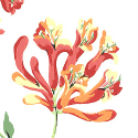 Product: T6725-Honeysuckle
