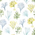 Product: T6738-Kelp
