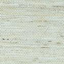 Product: T85003-Marantha Arrowroot