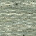 Product: T85004-Marantha Arrowroot