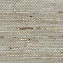 Product: T85005-Marantha Arrowroot